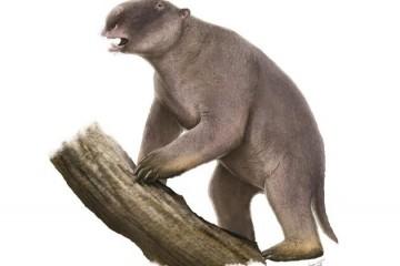 巨型物种灭绝之谜体形大小不代表一切会挖洞很关键