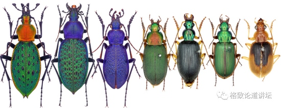 对人类社会而言苍蝇其实是益虫